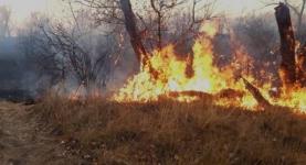 Собирая дрова, сельчане чуть не пострадали от пожара