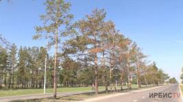 Причину массовой гибели деревьев в Павлодаре озвучили биологи