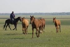 В Лебяжинском районе пастух подозревается в растрате