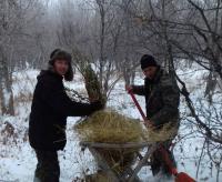 Павлодарские лесники начали подкармливать диких животных