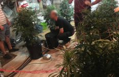 Павлодарец выращивал в гараже коноплю