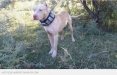 Житель Тараза заживо содрал со своей собаки шкуру