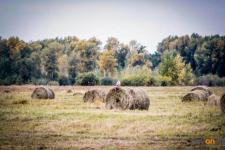 Миллион тонн сена подвезли к местам зимовки скота в Павлодарской области