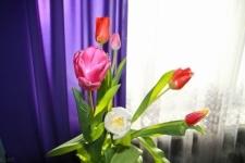 8 марта - успешный день для цветочников