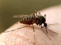 На борьбу с комарами в Павлодаре потратят 160 млн тенге