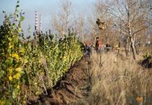 Две тысячи деревьев в качестве компенсации Павлодару высадят предприятия