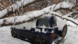 Под тяжестью снега деревья падают в Усть-Каменогорске