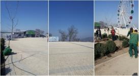 Руководство объяснило отсутствие деревьев на площадке Коктобе