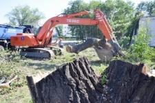 Городские власти уверяют, что спиленные деревья получили малоимущие
