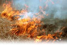 Два жителя Павлодарской области подожгли траву на сенокосных угодьях