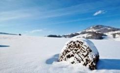 В стоге сена нашли заблудившегося в степи жителя Павлодарской области