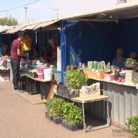 Площадки для торговли дачной продукцией определили в Павлодаре