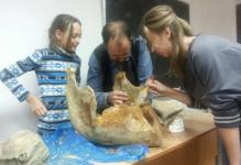 Обработку найденных в Жана кале палеонтологических находок начал ПавГео