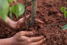 В управлении ЖКХ сообщили, какие деревья посадили в выходные в городах и районах Павлодарской области