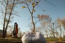 Активисты Яркокросса высадили в Павлодаре 30 деревьев