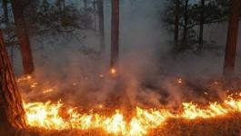 Сгоревший лес на территории Баянаульского национального парка восстановят
