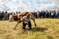 Двухсоткилограммового быка подняли павлодарские силачи на фестивалеҰлы Дала Елі