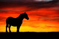 В Приртышье при пожаре погибло девять лошадей