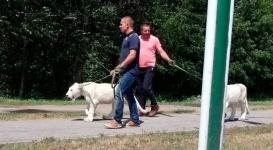 В Усть-Каменогорске двое мужчин выгуливали львов