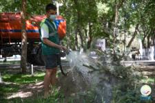 Какие фирмы в этом году должны поливать деревья в Павлодаре, сообщили в отделе ЖКХ