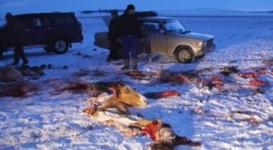 Необъяснимая кровожадность: В акмолинской степи расстреляли табун лошадей