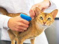 Домашних кошек и собак прочипируют в Алматы