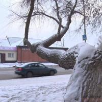 Заниматься санитарной обрезкой деревьев в Павлодаре с этого года будет один подрядчик