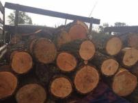 Житель Павлодарской области пытался вывезти древесину из поймы Иртыша