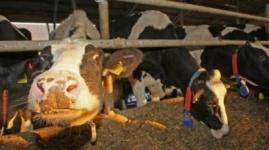 Выявлены случаи бешенства у животных