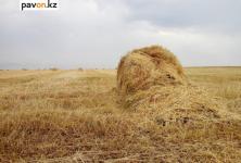 В Павлодарской области предпримут ряд мер для предупреждения нехватки грубых кормов для животных