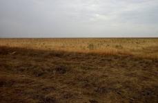 301 неиспользуемый участок земли нашли в Павлодарском районе