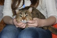 Выставка кошек и дог-шоу пройдут в Павлодаре