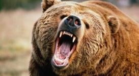 Медведь откусил палец уборщику зоопарка в Шымкенте