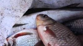 Полицейские изъяли у экибастузского пенсионера шесть мешков незаконно добытой рыбы