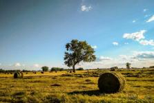 В Павлодарской области посчитают нагрузку на пастбища для скота