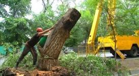 Алматинцев просят не паниковать из-за вырубки зеленых деревьев