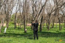 Павлодарцы выражают недовольство в социальных сетях, что высаженные деревья засыхают