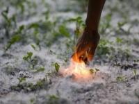 Павлодарские пожарные просят не жечь тополиный пух