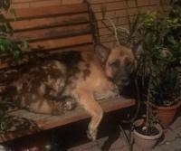 В Павлодаре хозяева усыпленного пса намерены добиться наказания для местной службы отлова