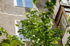 В Павлодарской области банкиры высадят 190 деревьев