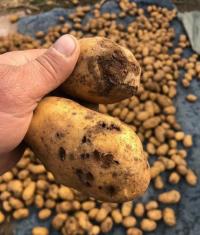 Качество картофеля, купленного на сельхозярмарке в Павлодаре, возмутило горожан