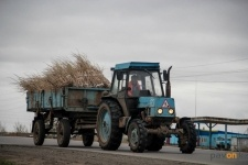 Количество пирамидальных тополей в зеленом поясе Павлодара увеличится до 4,8 тысяч