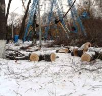 Проблему спиленных деревьев в павлодарских парках прокомментировал аким Павлодара