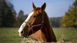 В Карагандинской области чиновник отобрал лошадь у сельчанина за победу на тендере