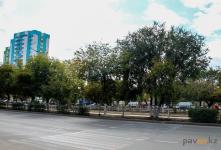 Павлодару нужно больше деревьев