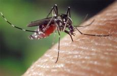 В борьбе с комаром и мошкой коррупции немножко