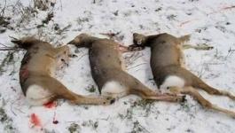 Трое мужчин задержаны в Павлодарской области за охоту на косуль