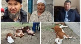 Казахстанское село поразила неизвестная болезнь