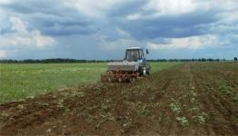 В Павлодарской области замакима района заставлял крестьянские хозяйства сажать и собирать для себя гречиху