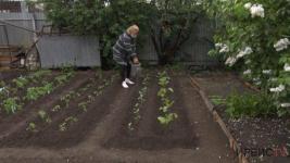 Огороды сохнут: нет поливочной воды у жителей частного сектора в Павлодаре